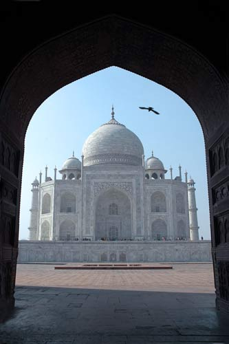 taj mahal and vulture-asia photo stock