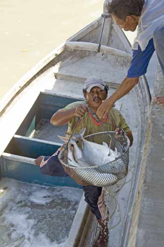 catch of fish-asia photo stock