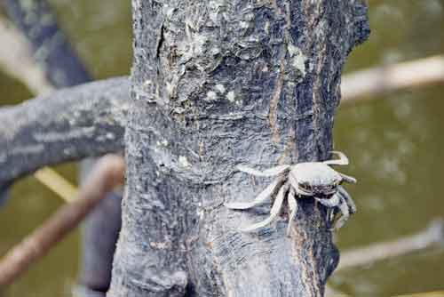 crab on tree-asia photo stock