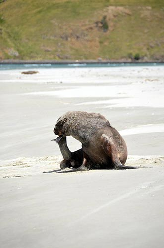 thinking sea lion-AsiaPhotoStock