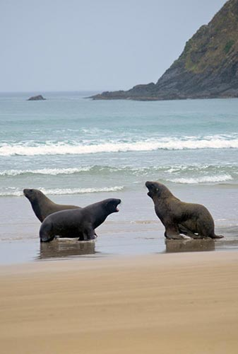 three sea lion-AsiaPhotoStock