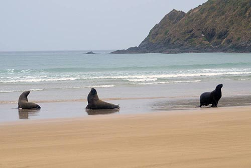 three sea lions-AsiaPhotoStock