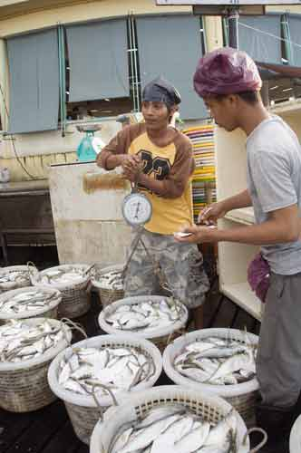 weighing the fish catch-asia photo stock