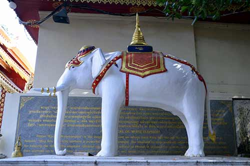 white elephant doi suthep-AsiaPhotoStock
